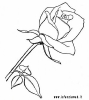 rosa (1)